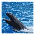 False Killer Whale Invitations