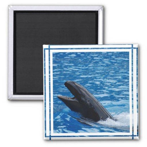 False Killer Whale Magnet