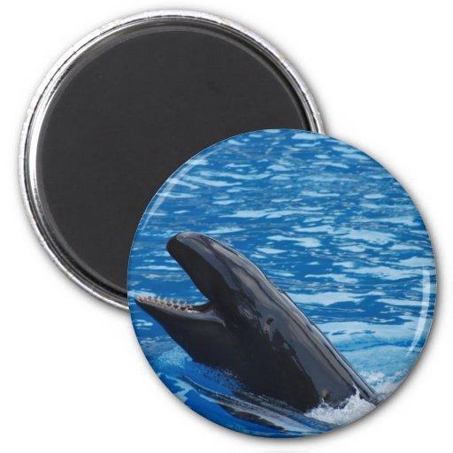 False Killer Whale Magnet Fridge Magnets