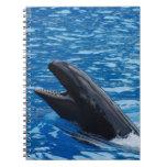 False Killer Whale Notebook