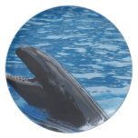 False Killer Whale Plate