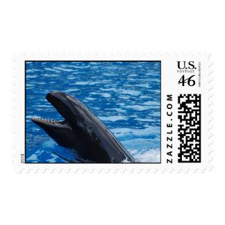 False Killer Whale Postage Stamp