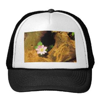 False Rue Anemone Trucker Hat