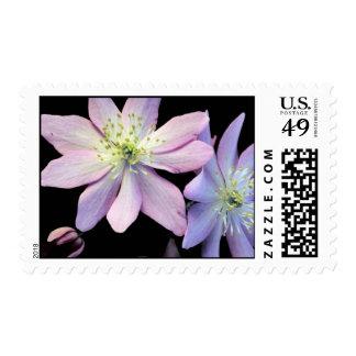 False Rue Anemone Stamps