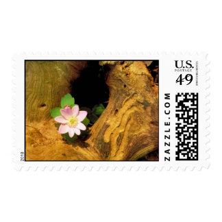 False Rue Anemone Stamp