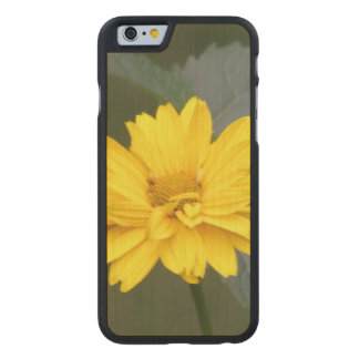 false-sunflower-10 carved® maple iPhone 6 case