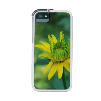 False Sunflowers iPhone 5/5S Cases