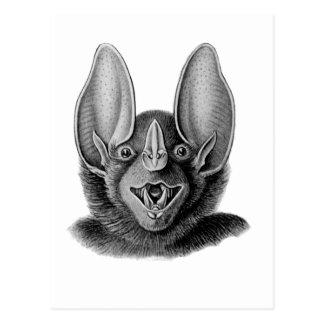 False Vampire Bat Postcard