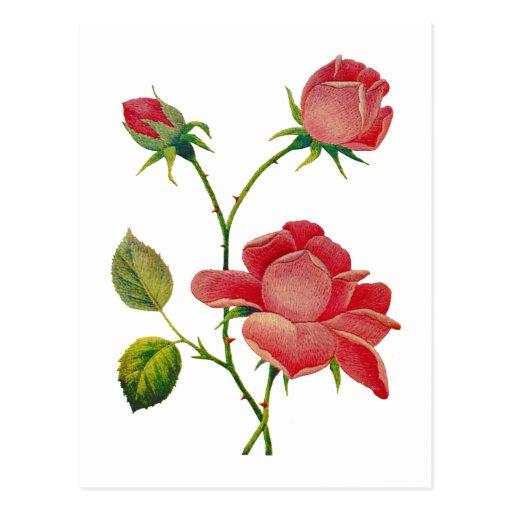 Falsos rosas de color rosa oscuro bordados tarjetas postales