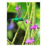Falta de definición de cernido del colibrí plantilla de membrete