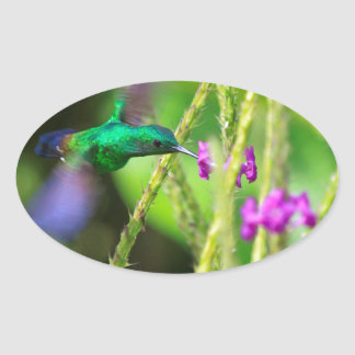 Falta de definición de cernido del colibrí colcomanias de ovaladas