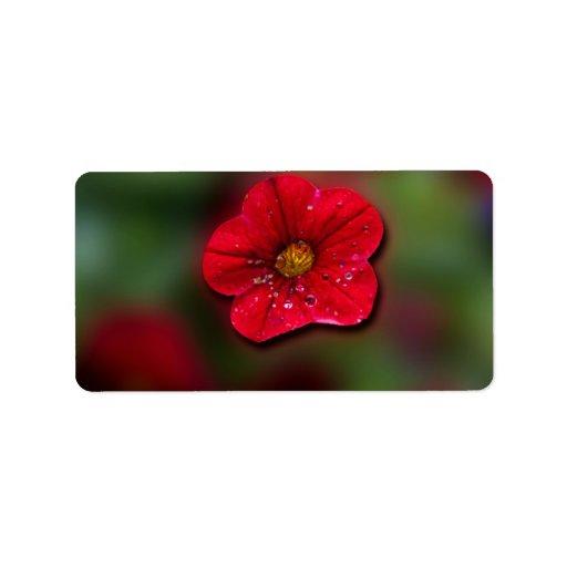 Falta de definición roja de la flor etiquetas de dirección