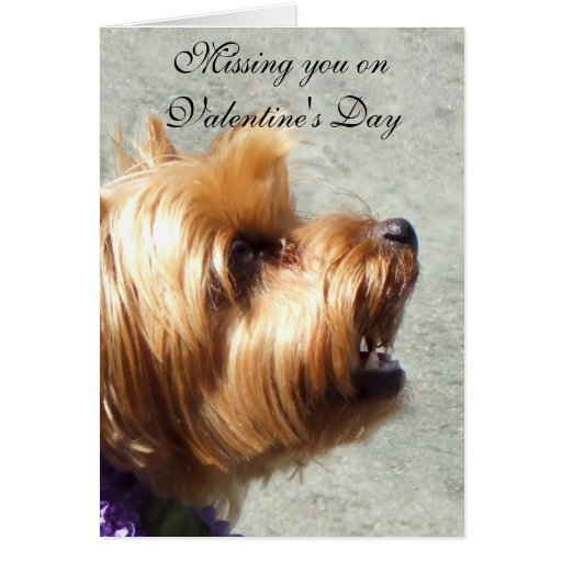 Falta de usted en la tarjeta de Yorkshire Terrier