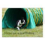 Falta de usted en su tarjeta de Boston Terrier del