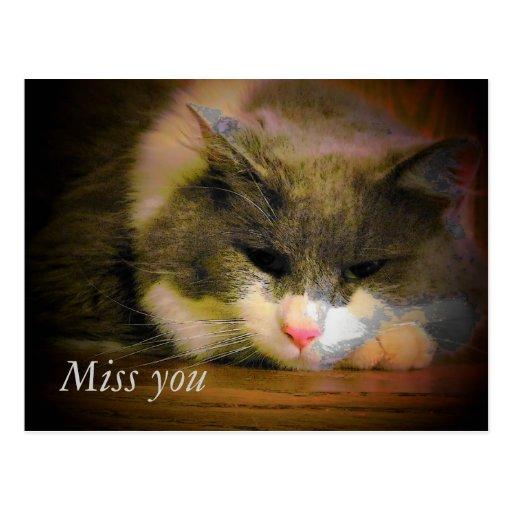 Falta triste del gatito usted tarjeta postal