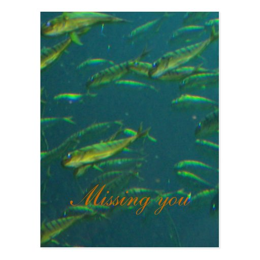 Faltándole escuela de oro de la postal de los pesc