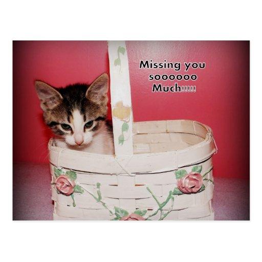 Faltándole postal del gatito