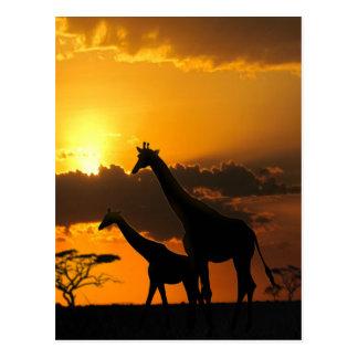 Familia 2 de la jirafa tarjeta postal