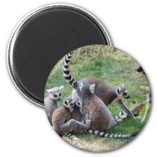 Familia atada anillo del lemur imán redondo 5 cm