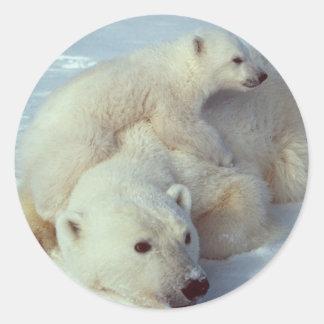 Familia blanca del oso polar pegatina redonda