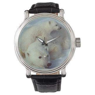 Familia blanca del oso polar relojes de pulsera