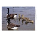 Familia canadiense del ganso tarjetas
