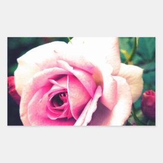 Familia color de rosa rosada pegatina rectangular