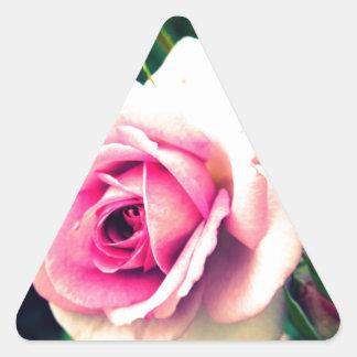 Familia color de rosa rosada pegatina triangular