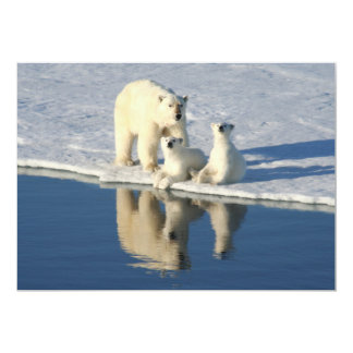 "Familia curiosa del oso polar invitación 5"" x 7"""