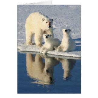 Familia curiosa del oso polar tarjeta pequeña