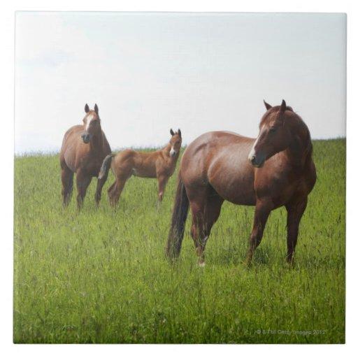Familia de caballo en campo azulejos ceramicos
