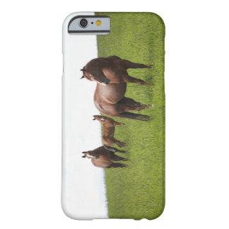 Familia de caballo en campo funda para iPhone 6 barely there