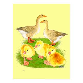 Familia de color de ante del ganso tarjetas postales