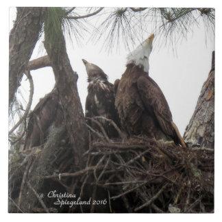 Familia de Eagle que canta la teja de Spiegeland