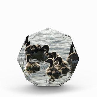 Familia de gansos en el lago