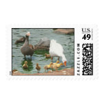 Familia de gansos sello