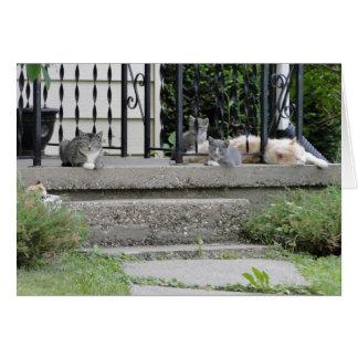 Familia de gato/cumpleaños tarjeta de felicitación