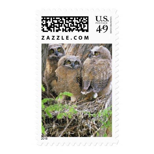 Familia de grandes Owlets de cuernos (virginianus