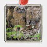 Familia de grandes Owlets de cuernos (virginianus  Adorno De Reyes