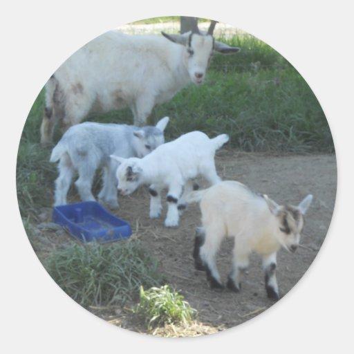 Familia de la cabra del bebé etiqueta redonda