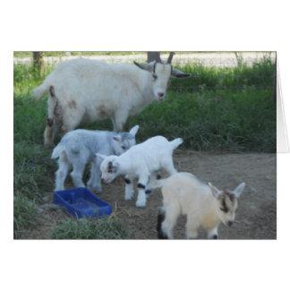 Familia de la cabra del bebé tarjeta pequeña