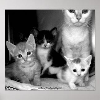 Familia de la cosa mal encajada de gatos impresiones