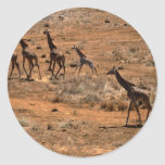 Familia de la jirafa pegatina redonda
