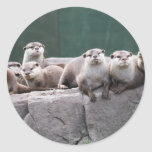 Familia de la nutria pegatinas redondas