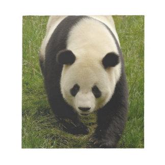 Familia de la panda gigante (melanoleuca del Ailur Bloc De Papel