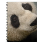 Familia de la panda gigante (melanoleuca del Ailur Libro De Apuntes