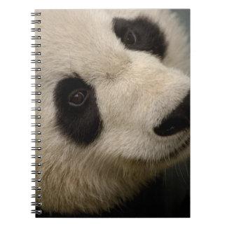 Familia de la panda gigante (melanoleuca del Ailur Libros De Apuntes Con Espiral