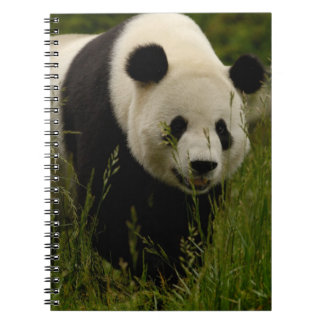 Familia de la panda gigante (melanoleuca del Ailur Cuaderno
