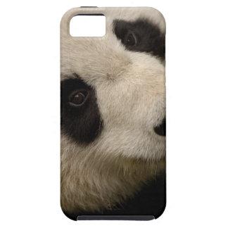 Familia de la panda gigante (melanoleuca del iPhone 5 funda