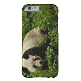 Familia de la panda gigante (melanoleuca del funda de iPhone 6 barely there